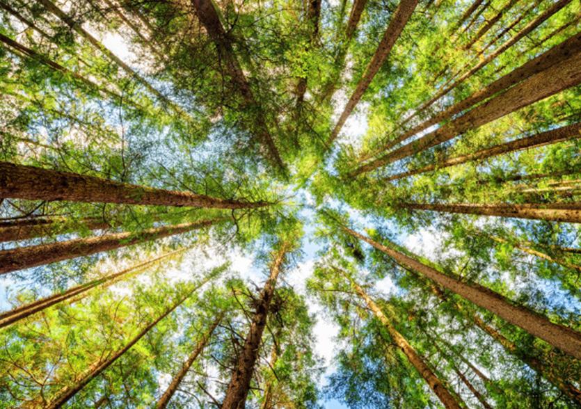 Für Waldbesitzer!